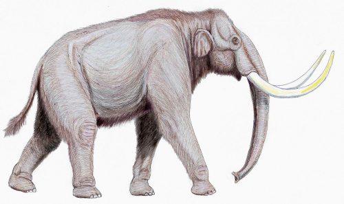 West Runton Mammoth